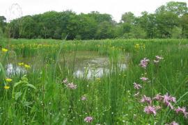 Fond de l'étang de Xurrumilatx - © A. Boiché / CEN Aquitaine