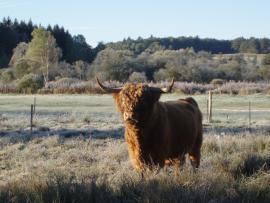 Highland Montour - © S. Raffier